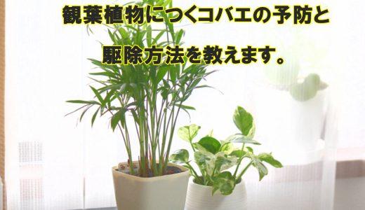 観葉植物につくコバエの予防と駆除方法を教えます。