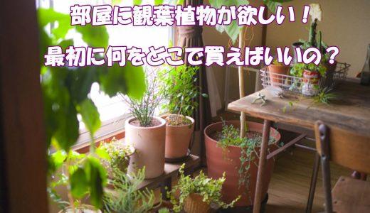 観葉植物を育てたい。最初に何をどこで買えばいいの?