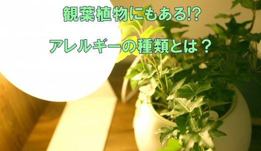 アレルギーの方はご注意!観葉植物にもあるアレルギーの種類とは?