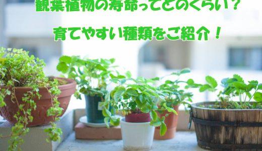 一つは室内に欲しい観葉植物。その寿命はどのくらい?