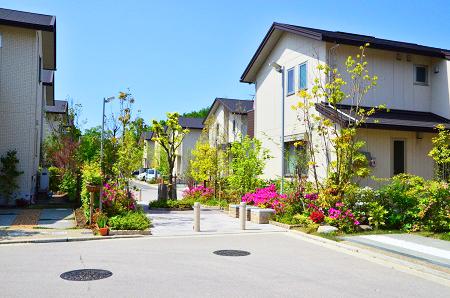 庭木と住宅街