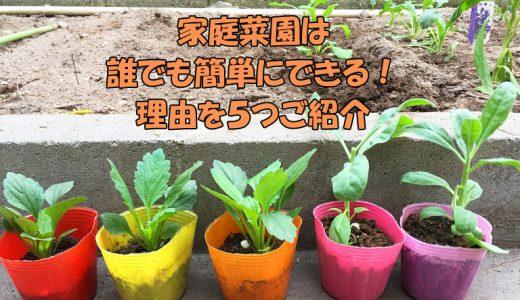 家庭菜園は誰でも簡単にできる!理由5つ