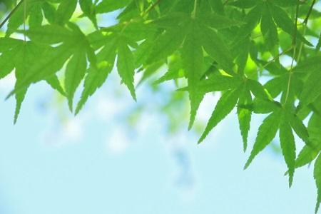 もみじの葉っぱ