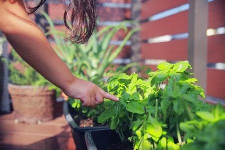 ハーブの家庭菜園と子供