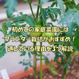 初めての家庭菜園にはプランター栽培がおすすめ!理由3つ