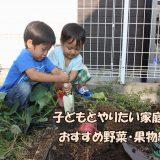 子どもとやりたい家庭菜園!おすすめ野菜・果物紹介