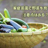 家庭菜園で野菜を育てる!注意点はある?
