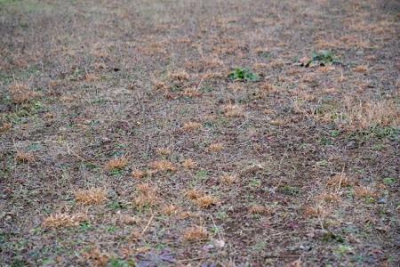 除草された土