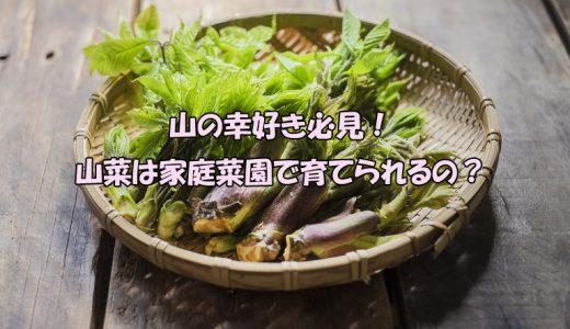 山の幸好き必見!山菜は家庭菜園で育てられるの?