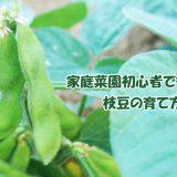 家庭菜園初心者でもOK!枝豆の育て方