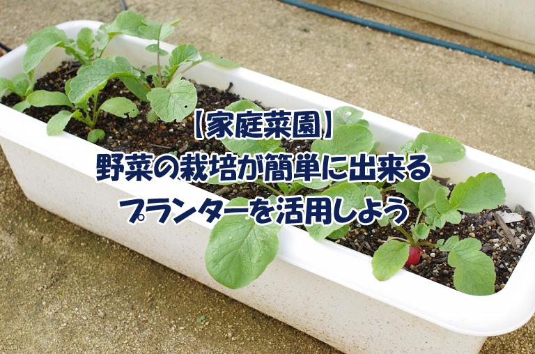 【家庭菜園】野菜の栽培を簡単に出来る方法?プランターを活用しよう!理由4つ