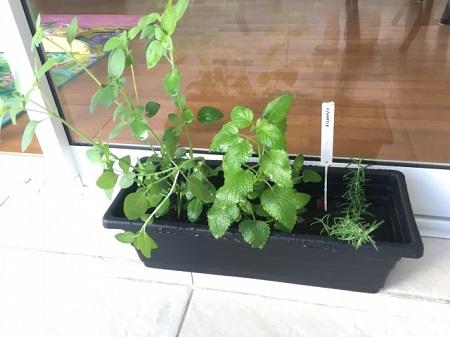 家庭菜園をプランターではじめる方法