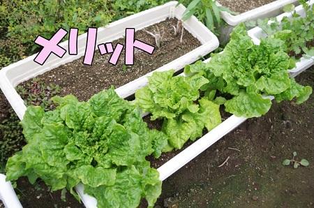 プランターで家庭菜園をするメリット