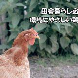 田舎暮らし必見!環境にやさしい鶏除草紹介!