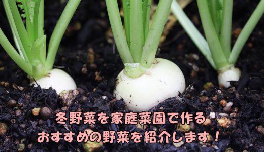 冬野菜を家庭菜園で作ろう!おすすめ野菜を紹介