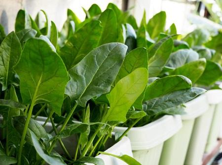 家庭菜園でできる!おすすめの3つの野菜