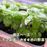 省スペース!キッチン菜園におすすめの野菜5つ