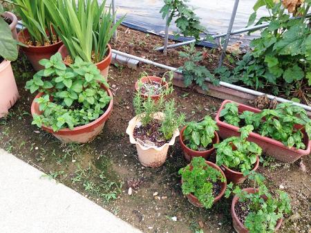 庭での発泡スチロールの家庭菜園