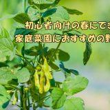 初心者向けの春にできる家庭菜園におすすめの野菜