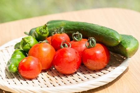 春に植えるのに向いている野菜