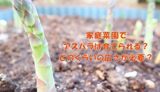 家庭菜園でアスパラは育てられる?どのくらいの広さが必要?