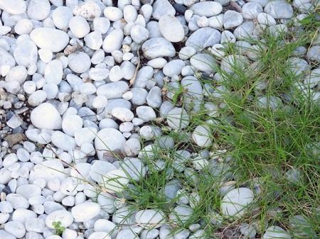 砂利を撒くことで除草もできる