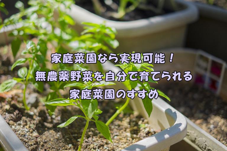家庭菜園なら実現可能!無農薬野菜を自分で育てられる家庭菜園のすすめ