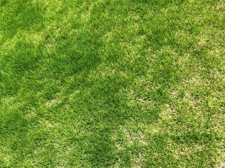 除草で迷ったら生えない環境も検討する