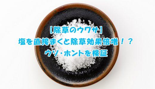 【除草のウワサ】塩を直接まくと除草効果倍増!?ウソ・ホントを検証