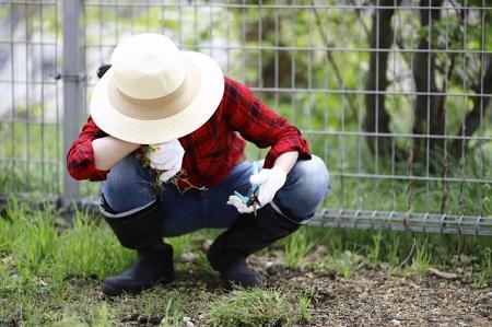 業者に庭の草刈りを依頼する理由