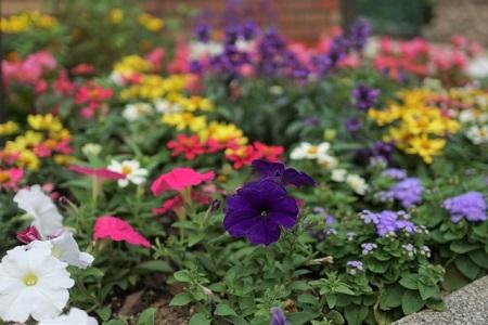 花壇で華やかな庭に
