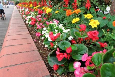 赤レンガの花壇